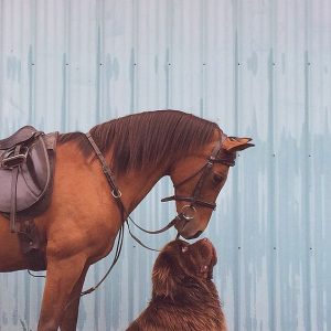 Horse and Dog Best Friends