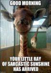 funny giraffe quote
